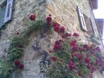Le mie adorate e profumatissime rose