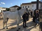 Day trip to Golega - the Horse Capital of Portugal