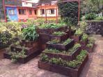 Esta es la pirámide de plantas medicinales  de Plaza Alcatraces!