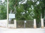 Ingresso alla pineta di Eucalipti di fronte la villa