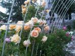 the rose garden of the villa
