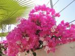 Villa flowers