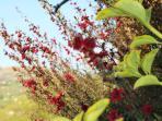 Las flores de la Cabaña del Abuelo