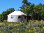 Beautiful Spring day at Caribou Yurt!