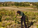 Viñas - Finca de Agricultura Ecológica