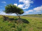Windswept tree on South Downs National Park
