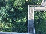 This is the canopy walk to the beach.  Then a few paces through forest floor onto the sand