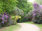 A lovely walk at Sherringham Park NT