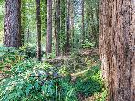 Modern Zen, Redwoods