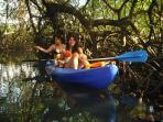 Kayaking in the mangrove river