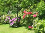 et aussi quelques rhododendrons ...