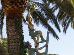 Darden statues under the palms