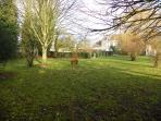 Grand jardin clos où vos amis à quatre pattes sont les bienvenus