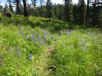 The trail to the lake is lined with local wildflowers