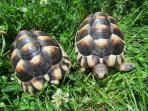 Turtles, pets in garden