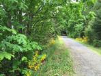 Galloping Goose Trail (4 meter easement bisects the property)