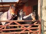 There's often horses either in the stables or fields - here we have Apollo, Danny and Rosie!