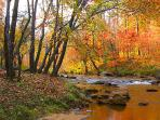 FALL View - Cabin DIRECTLY on  Broad River! A few steps to Paradise! Fish or frolic in our backyard