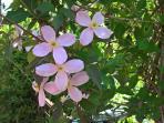 Clematis creates a private back garden