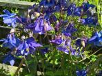 Flowers for wildlife