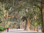 Moss hung trees provide the island escape and natural beauty of Hilton Head
