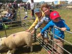 Visit one of the many agriculture country shows held in the summer.