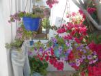 Flowers by the Front door of Villa Priene 2016