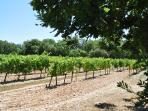 Vue sur les vignes à partir de la roulotte