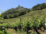 Les vignobles route des vins