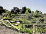 The vineyard at the Agritourism
