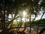 Venez admirer le lever du soleil sur la plage de Petit Macabou pour commencer votre journée
