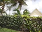 Coconut trees in the garden