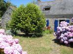 Front garden flowered with hortensias