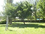 Garden with grass and fruittrees
