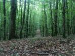 Saint Sever Forest
