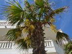 Palm, Villa Palme