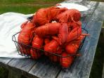 Pick up Lobster from local fishermen