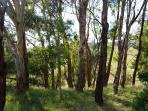 native forest and fields on site to picnic