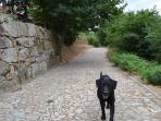 'Via Appia'