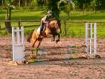 Beechlawn show jumping