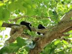 Wanna see monkeys?. Visit ZumaLoft, they love being at the trees in our property!.