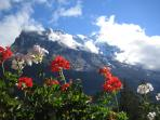 Eiger and Flowers on the terrace