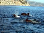 venez découvrir les dauphins sédentaires dans la baie de Setubal