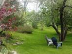 Front yard: In May the apple trees are in bloom