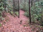Hiking trail on property to White Owl Falls.