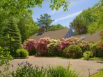 Front yard - rhododendrons