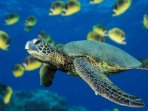 Meet our sea turtles while snorkeling in our bays.