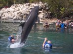 Swim with dolphins in the resort's village