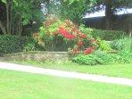 La terrasse entre le jardin et le bois