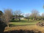 Le parc et ses arbres